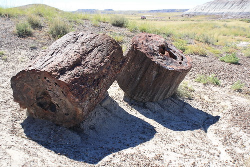 Day 4: Petrified Forest