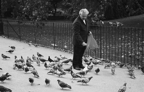 Feeding the Birds 4