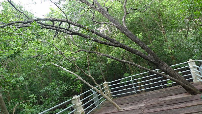 Taman Paya Bakau - 05