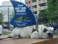 Not So Happy Shark Week