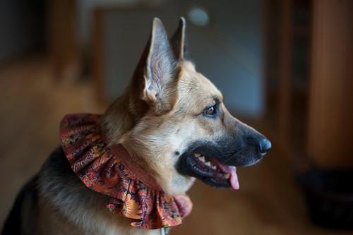 Thanksgiving Minnie collar