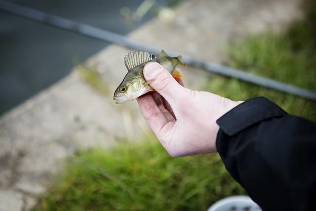 Fishing_15
