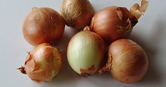 """Die Zwiebel. Die Zwiebeln. Die Küchenzwiebel. Die Küchenzwiebeln. Die Zwiebel ist eine sehr wichtige Gewürzpflanze. • <a style=""""font-size:0.8em;"""" href=""""http://www.flickr.com/photos/42554185@N00/34314027792/"""" target=""""_blank"""">View on Flickr</a>"""