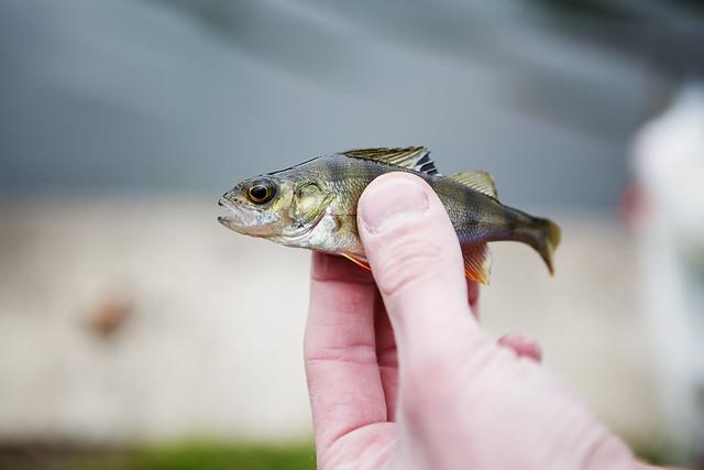 Fishing_31