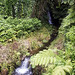 "Small Stream, Akaka Falls State Park, Hawaii • <a style=""font-size:0.8em;"" href=""http://www.flickr.com/photos/37092860@N02/33792549423/"" target=""_blank"">View on Flickr</a>"