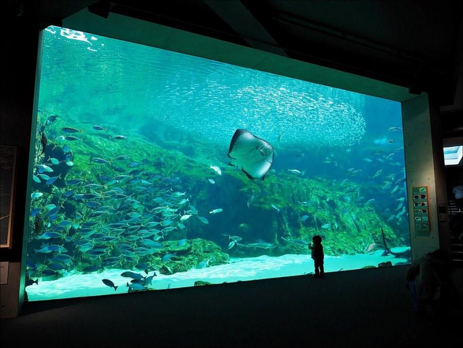 九十九島珍珠海洋遊覽區