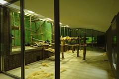 341 - 2017 07 01 - Uitbreiding chimpansee binnenverblijf met oud bezoekerspad met rechts schuiven voor buitenverblijf