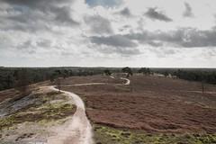landschap 2 Leo Reijnen