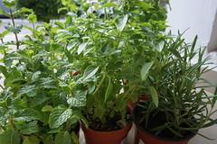 2017/365/175 Herbs.