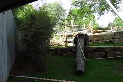 296 - 2017 06 10 - In het gorillaverblijf in aanbouw