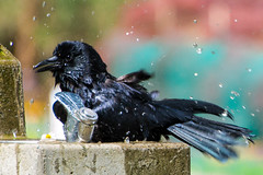 Taking a bath at Stanley Park, Vancouver