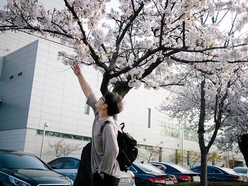 170409_MDY_벚꽃 나들이_7