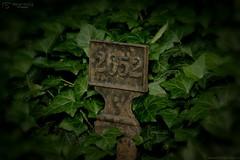 Grave number
