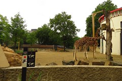 372 - 2017 07 01 - Giraffen- en zebra Savanne