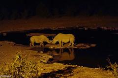 DSC04466Namibie animaux
