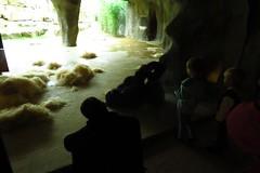 369 - 2017 07 01 - Gorilla (Matadi) in de grot