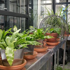 """In a meeting room called """"The Greenhouse"""""""