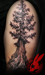 Pine Tree Redwood Giant Pacific Coast Realistic 3d black and grey Tattoo by Jackie Rabbit