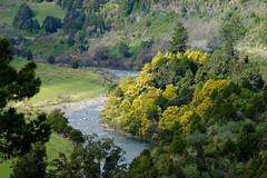 Whanganui River From Piriaka Lookout