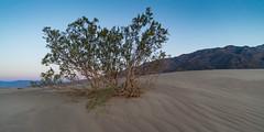 Mesquite Flat Dunes #3