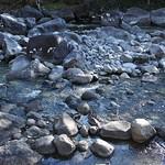 o rio (14)