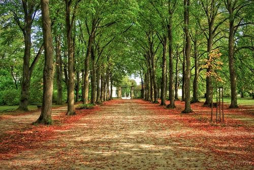 Promenade Autumn Sétány Ősz