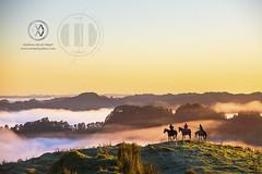 NZ17_wright11439
