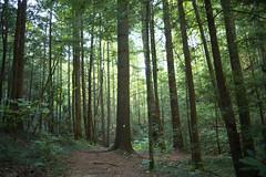 Trail in hemlock grove