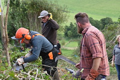 "260/365 Hedge Laying !! • <a style=""font-size:0.8em;"" href=""http://www.flickr.com/photos/7656159@N08/36887067610/"" target=""_blank"">View on Flickr</a>"