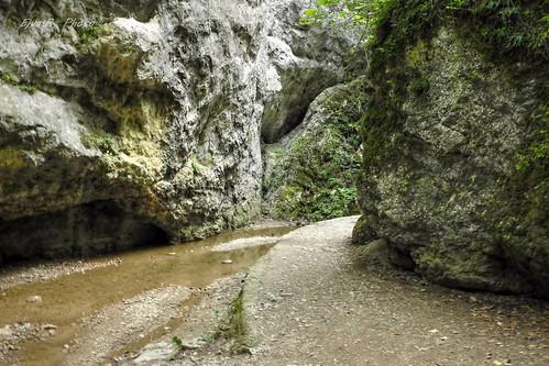 Hiking Forest Glen / Túra Erdő Szurdok