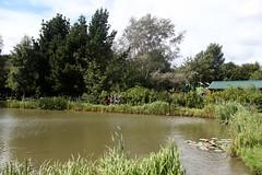 Ponderosa Farm lake