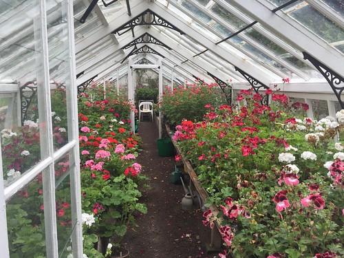 Hartland Abbey Gardens greenhouse