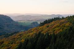 Autumnal Eifel