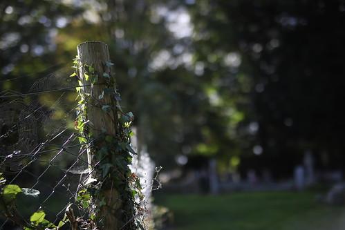 Wembdon Churchyard 2