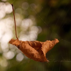 Floating Leaf III