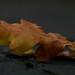 Höstfoto/autumn Fotosöndag