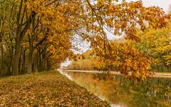 Autumn along the canal