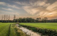 Evening river
