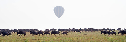 Masai Mara - Day 4 (The last drive)