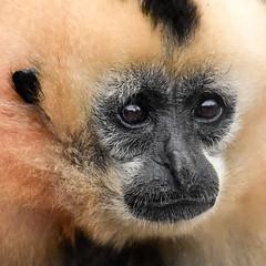 Visit to Monkey World
