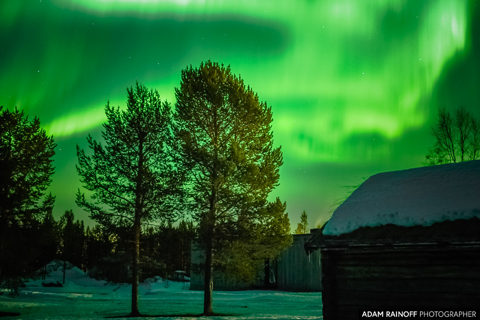 Northern Lights Christmas Tree Farm