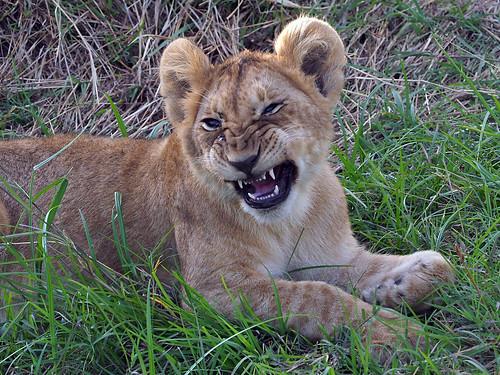 Masai Mara - Day 2