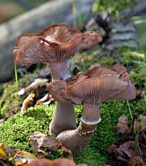 autumn, mushroom time