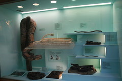 """Natural History Museum London • <a style=""""font-size:0.8em;"""" href=""""http://www.flickr.com/photos/160223425@N04/27118105099/"""" target=""""_blank"""">View on Flickr</a>"""