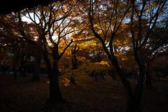 Autumn@Tofukuji