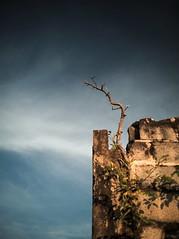 stick wall sky
