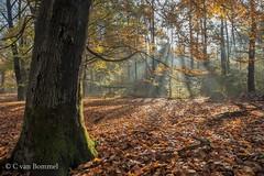 Thema 4 seizoenen Herfst