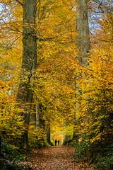 Forêt de Soignes, BE