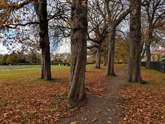 trees-pixel-2-xl
