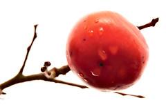 persimmon 秋の果実 #3